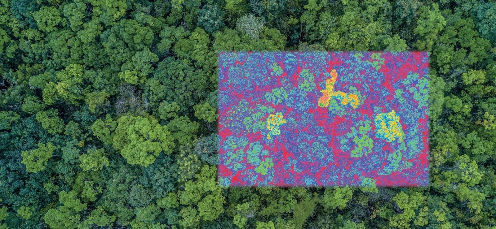 Hyperspectral Remote Sensing of Forest