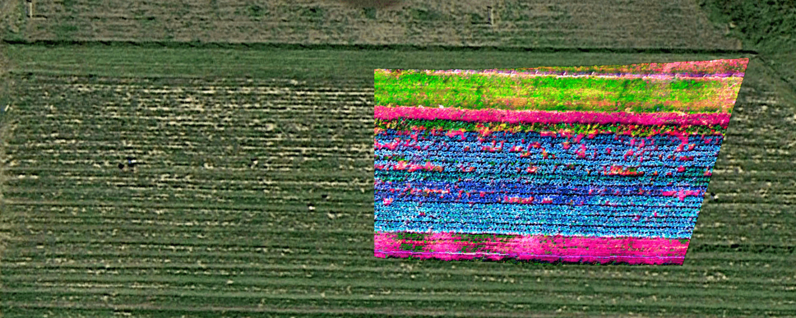 Hyperspectral Remote Sensing Data of Agriculture
